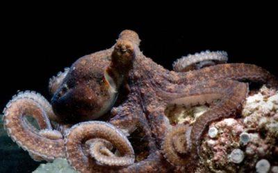 La beauté sous-marine
